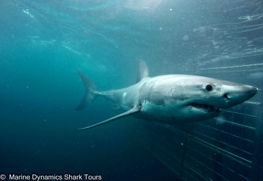 Shark Cage Diving with Chauffeur driven RETURN trip from Cape Town