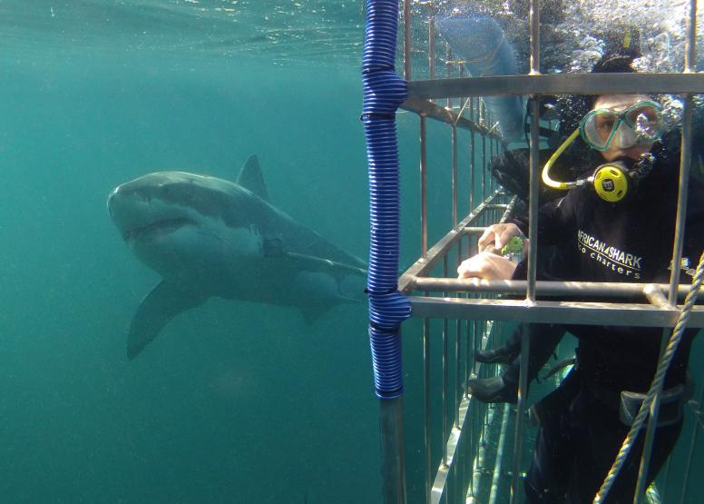 AM Shark Trip Simons Town image 1