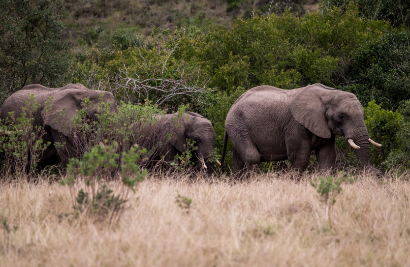 2 Hour Game Drive image 3