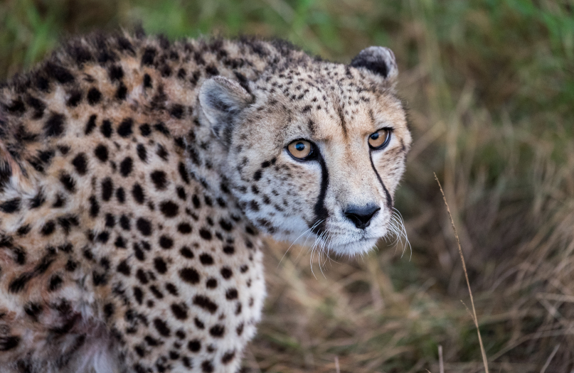 2 Hour Game Drive image 5