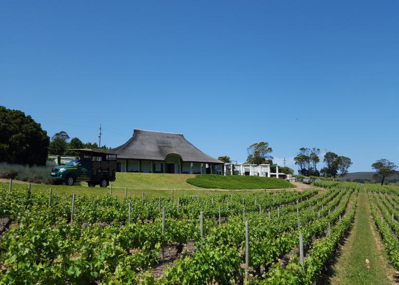 Wine Hopper Day Trip image 4