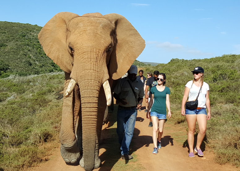 ELEPHANT WALK & INTERACTION Morning/Afternoon image 1