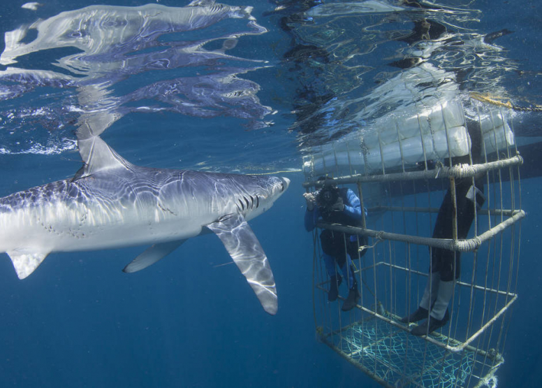 Shark Cage Diving Cape Town image 1