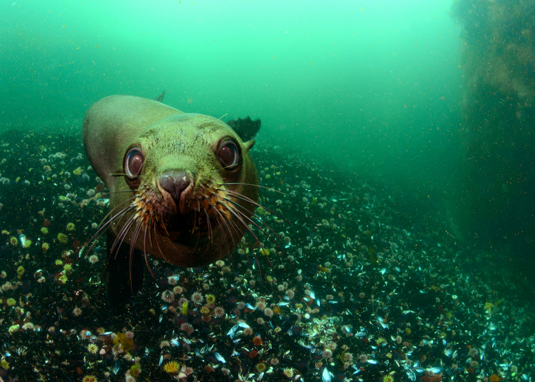 Seal and Kelp Forest Package image 2