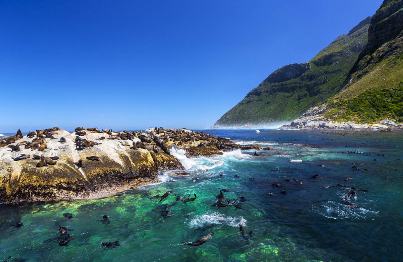 Seal Snorkeling with Cape Town Bucket List
