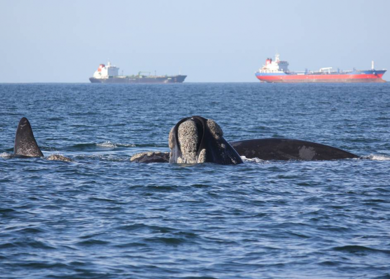 Boat Based Whale Watching image 5