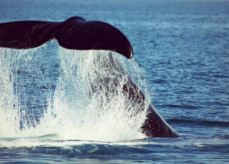 Boat Based Whale Watching image 1