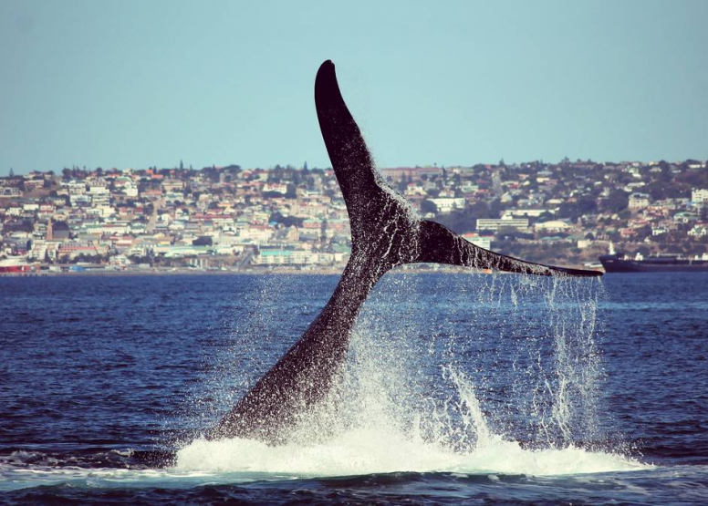 Boat Based Whale Watching image 7