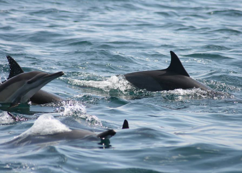 Dolphin Encounters image 2
