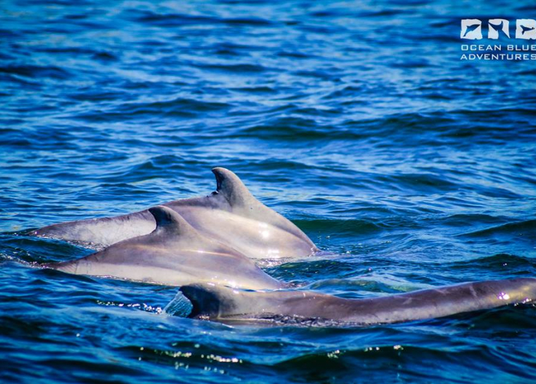 Dolphin Encounters image 3