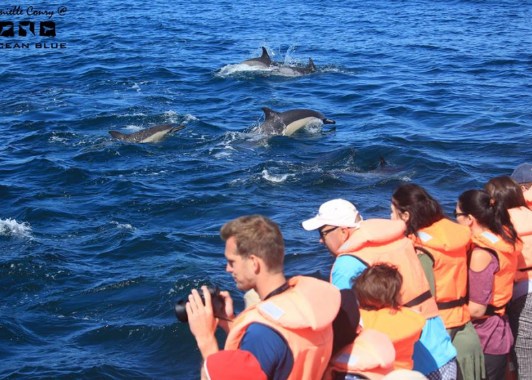 Dolphin Encounters image 4