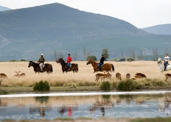 2 Hour Horse Safari image 9