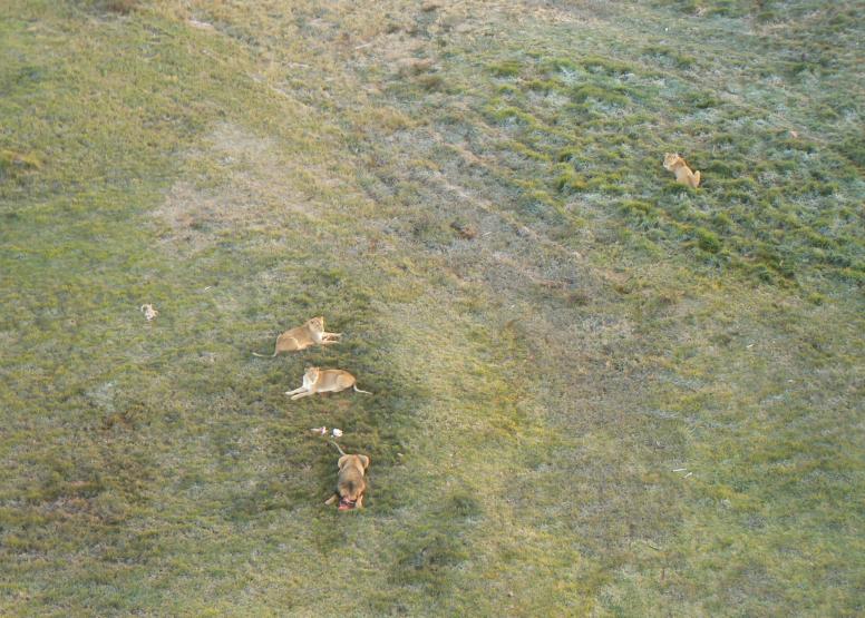 Safari Flight image 7
