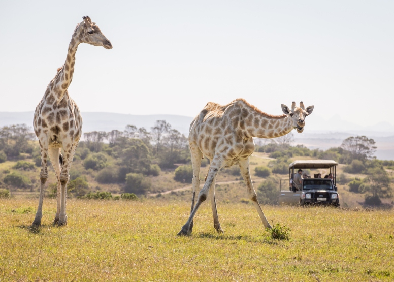 Guided Game Drives image 8