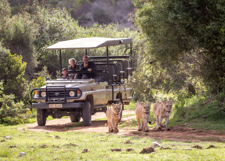 Guided Game Drives image 9