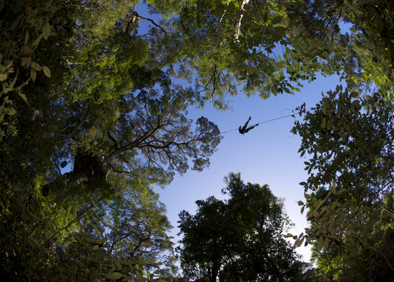 Tsitsikamma Canopy Tours image 2
