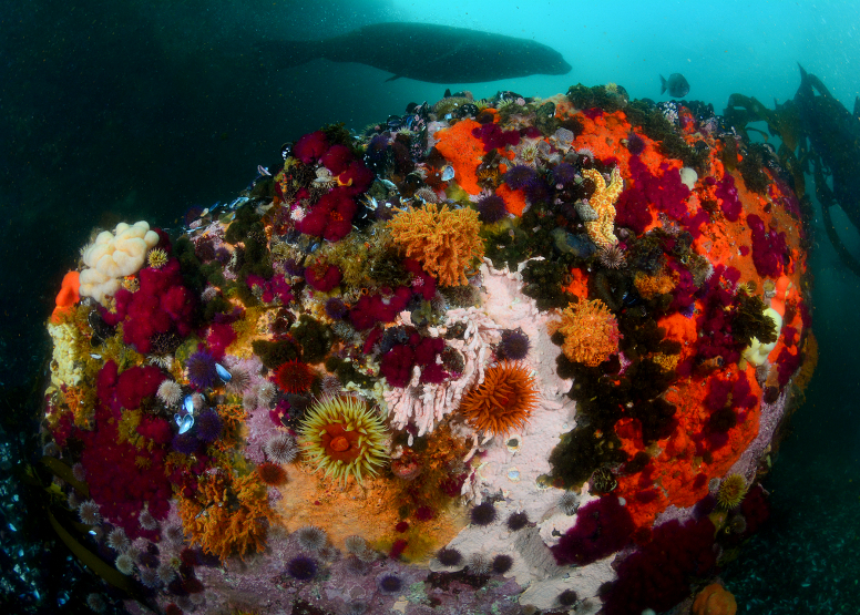 Seal and Kelp Forest Package image 5