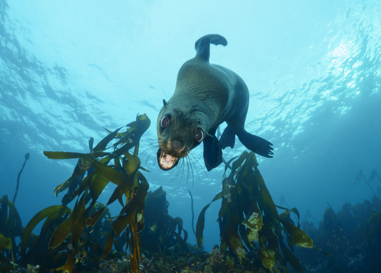 Seal and Kelp Forest Package image 6