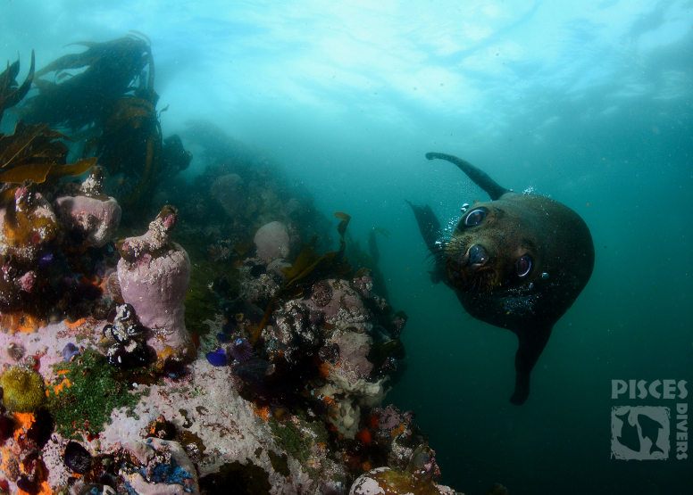 Seal and Kelp Forest Package image 7