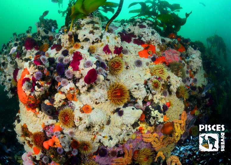 Seal and Kelp Forest Package image 8