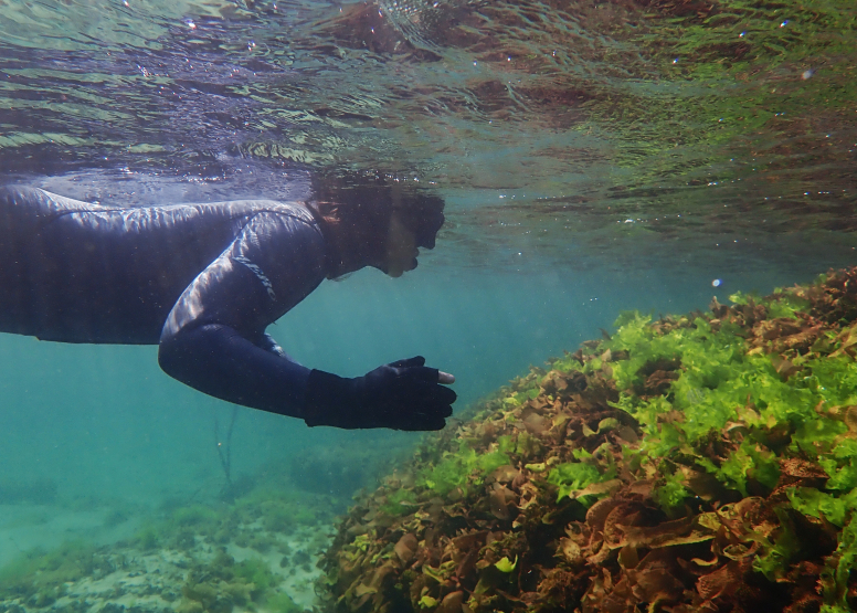 Snorkel Cape Town's Stunning Tidal Pools image 5