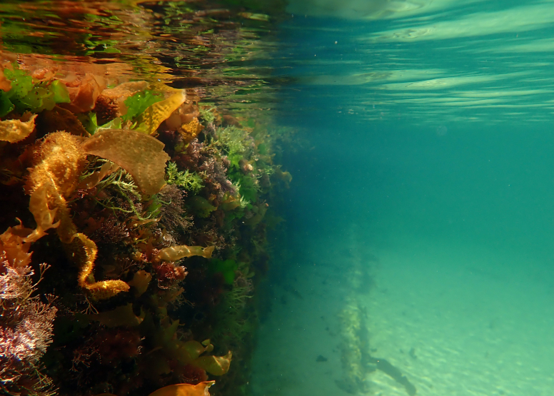 Snorkel Cape Town's Stunning Tidal Pools image 6