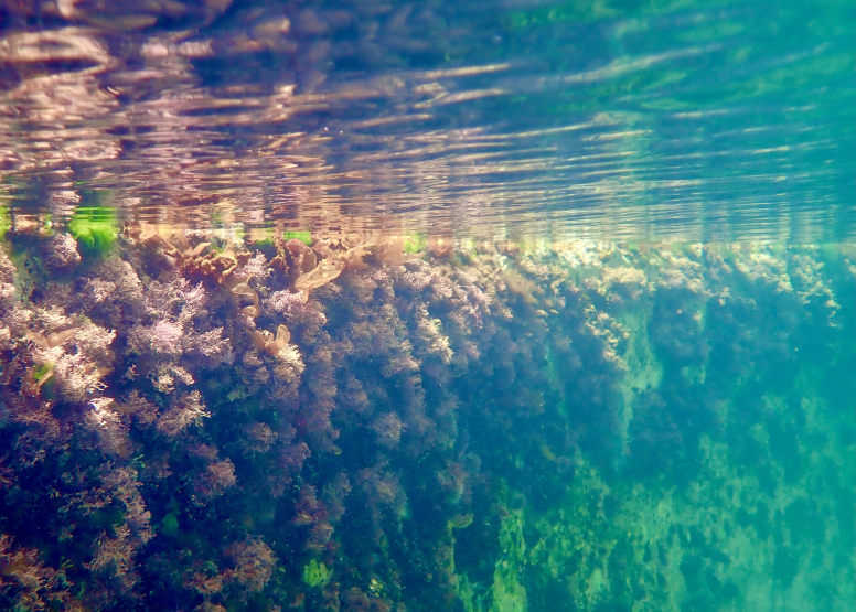 Snorkel Cape Town's Stunning Tidal Pools image 8