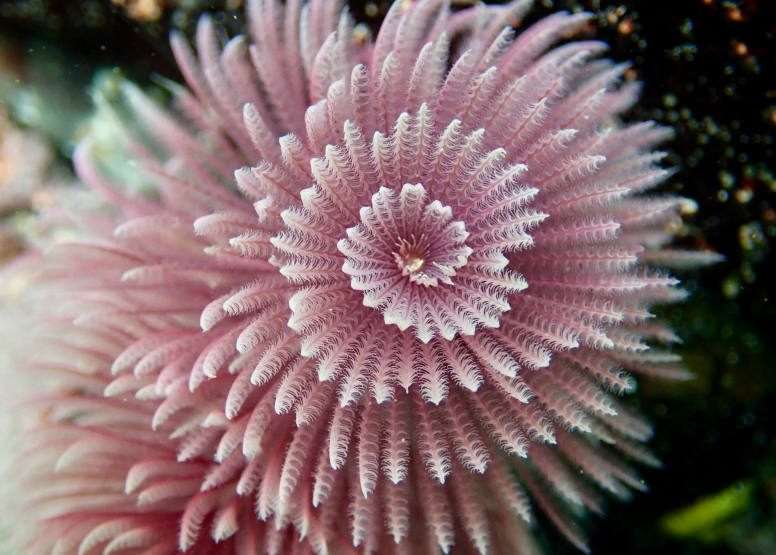 Snorkel Cape Town's Stunning Tidal Pools image 14
