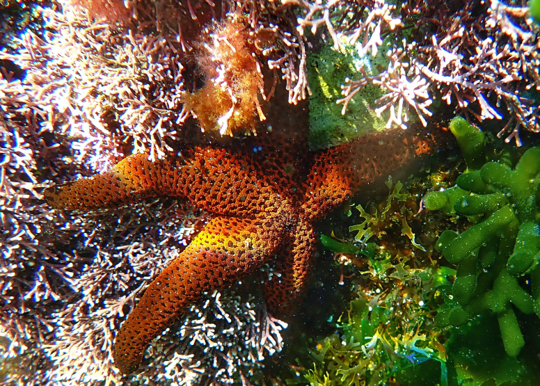 Snorkel Cape Town's Stunning Tidal Pools image 20